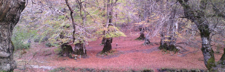 Vivi l'autunno a Villetta Barrea